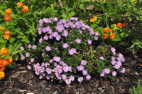 flowering plants for texas and natives a round rock garden