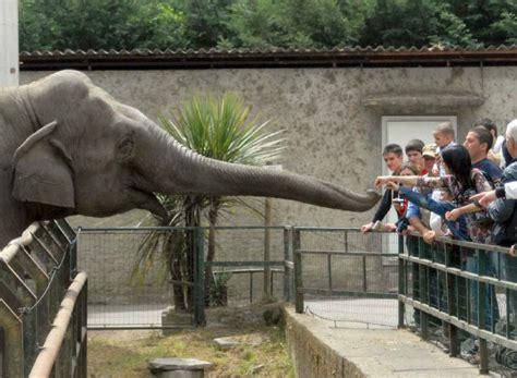 ingresso zoo di pistoia zoo e piscina termale weekend famiglia