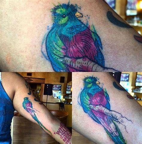 watercolor quetzal tattoo quetzal watercolor guatemala bird