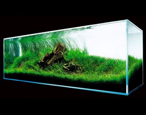 aquascape design principles aquascape basic principles and elements of landscaping