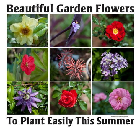 10 Types Of Beautiful Flowers To Plant In Your Garden For Types Of Garden Plants And Flowers