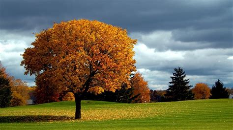 nature trees forest branch landscape fall leaves