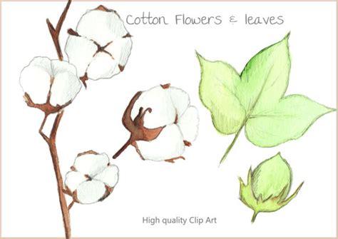 Cotton Arts 5 cotton pictures clip 26