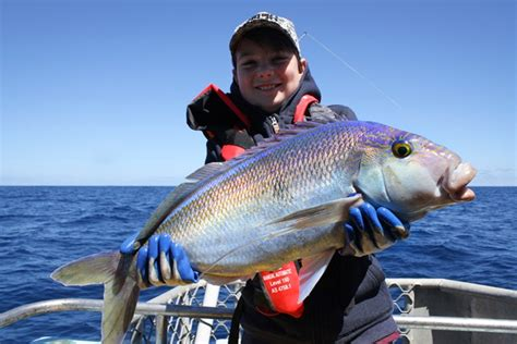 fishing boat charters mandurah full day deep sea fishing charter 220pp aud port