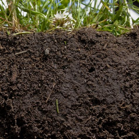 backyard soil how to create amazing garden soil from clay silt or sand