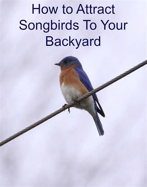 1104 best bluebirds images on pinterest bird houses
