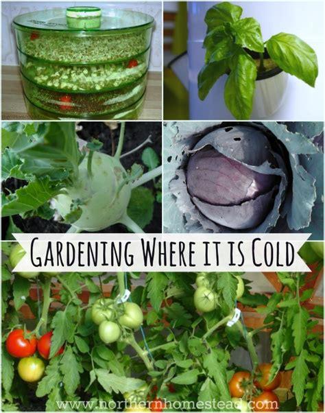 zone 3 gardening gardening where it is cold zone 3 northern homestead