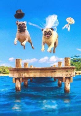 pug marriage pugs dogbreed gifts pug greeting cards notecards
