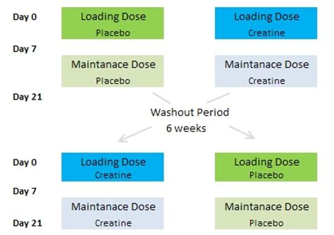 creatine dht creatine causes increase in dht tgb supplements