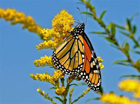 Fleurs De Printemps by Photo Gratuite Papillon Fleur Printemps Image