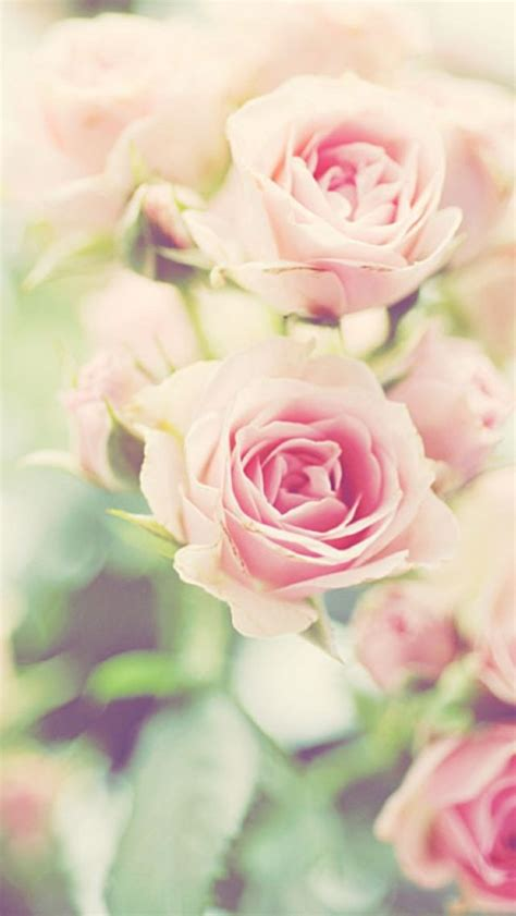 wallpaper flower portrait spring flower iphone wallpaper wallpapers pinterest