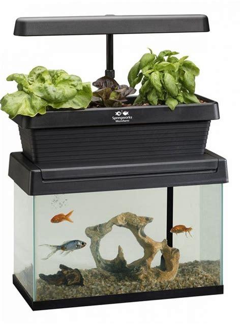 symbiotic fish tank gardens aquaponic garden