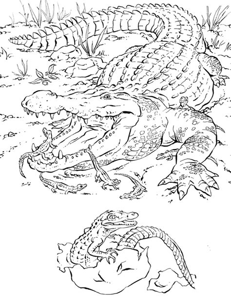 Realistic Alligator Coloring Pages Realistic Coloring Pages Realistic Coloring Pages Of Animals