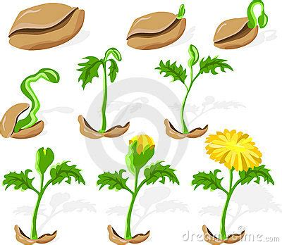 seed 02 royalty free stock photography image 13600987