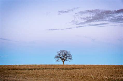 Dead Tree Landscape Photograph Lone Tree Hd Wallpaper Lone Landscaping