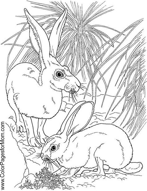 advanced coloring pages of animals free coloring pages of mom s birthday