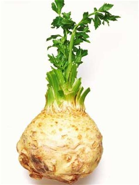 identifying root vegetables celeriac grow guide