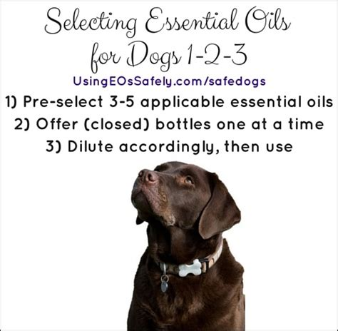 essential oils safe for dogs is it safe to use essential oils with dogs using essential oils safely