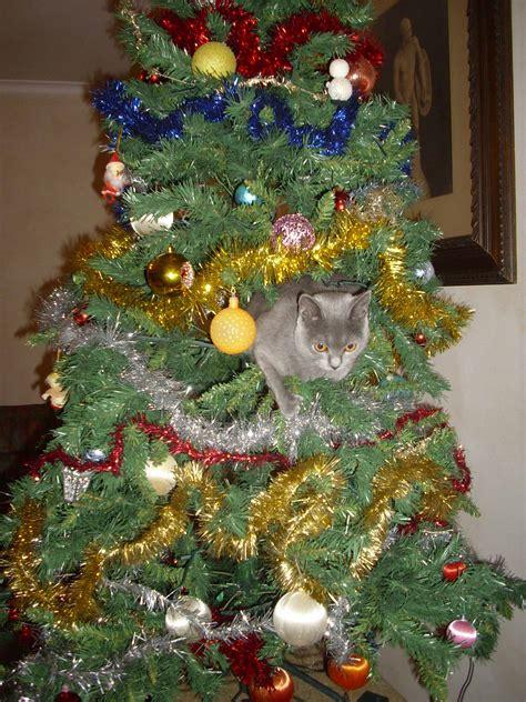 immagini di sull albero nala sull albero di natale un natale da gatto petpassion