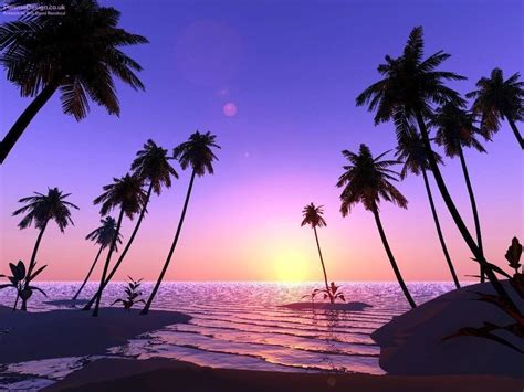 palm tree wallpaper palm tree desktop wallpapers wallpaper cave