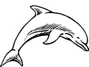 what color is a dolphin pictures of dolphins to color free coloring pages on