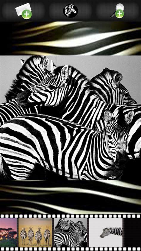 google wallpaper zebra zebra wallpapers android apps on google play