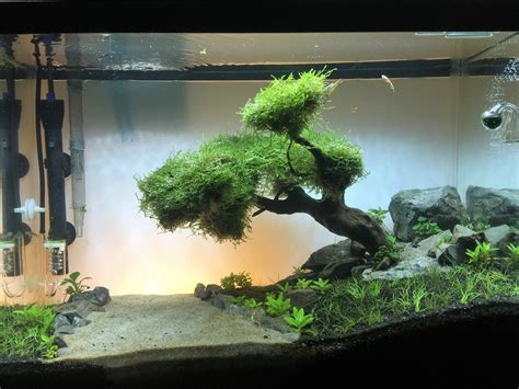 aquascape reddit fts 20 gallon river aquascape several months in aquariums
