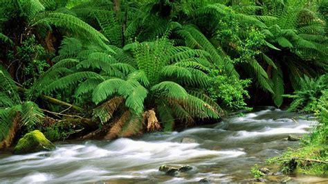 wallpaper desktop high resolution nature wallpapers high resolution wallpapers hd