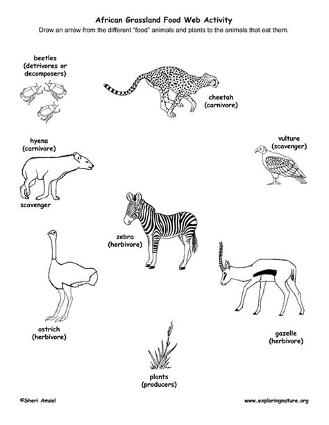 free coloring pages food web african grassland habitat food web puppet show pre k