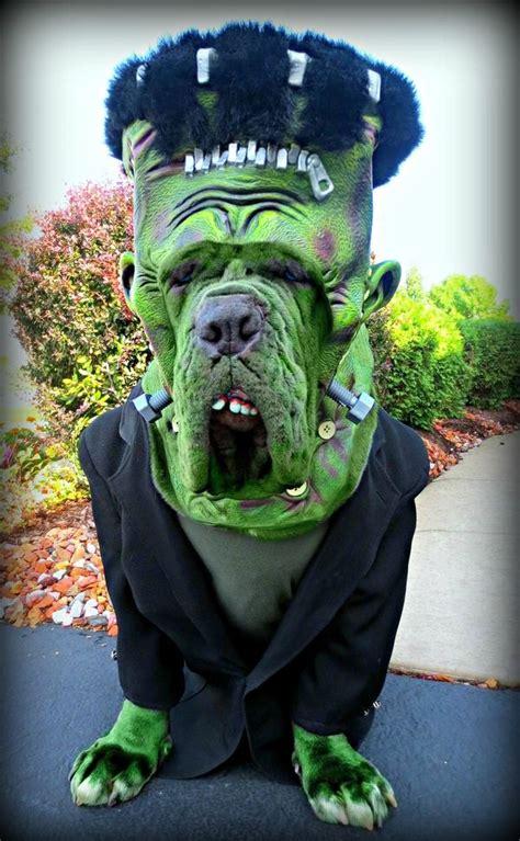 cool pet costumes  halloween hative