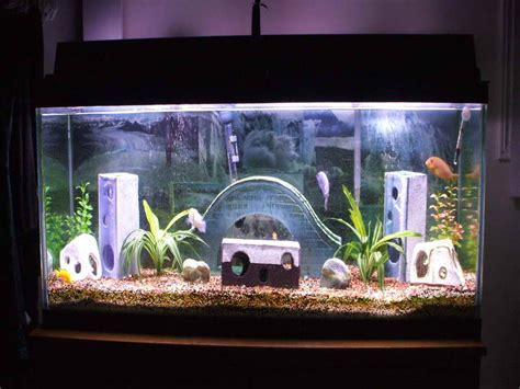 Unique Fish Tank Decorations by Decoration Unique Caving Aquarium Decoration Themes How