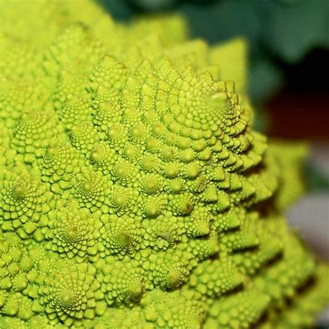 patterns in nature article stunning fractals in nature julie boyd