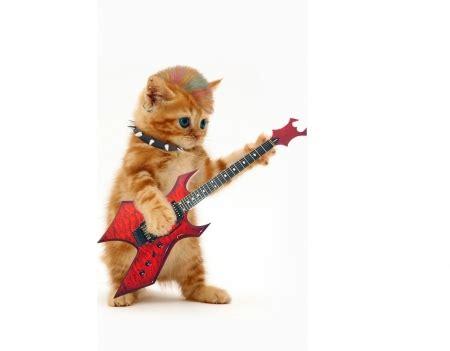 cat guitar wallpaper cute funny cat wallpapers image download 2018