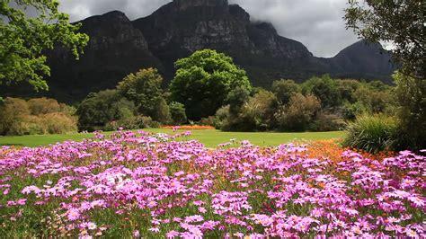Cape Town Botanical Gardens Kirstenbosch Botanical Gardens Cape Town South Africa