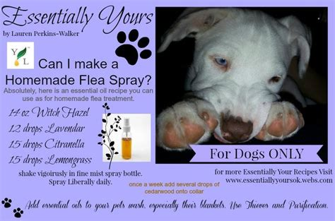 essential oils for fleas on dogs pin by melanie may on spookys essentials