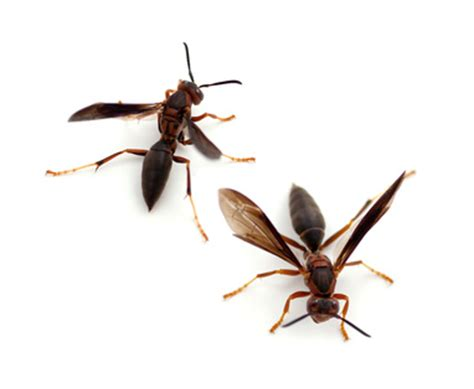 Forget Being Bitten Get Stung By This Kenneth Cole Ny Sting Shoe by Paper Wasp Sting Www Pixshark Images Galleries