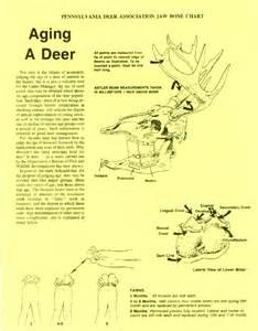 Deer aging deer tooth wear measurement deer aging chart deer hunting