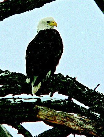 haircut coupons davenport ia watch the eagles soar in the quad cities chicago parent