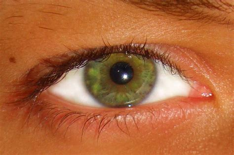 green eye color file green eye jpg