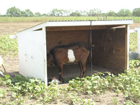 The Goat Shed by The Sifford Sojournal Goat Shed Redesign