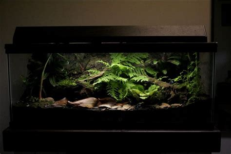 Lu Aquarium Mini 17 beste afbeeldingen terrarium op bouw