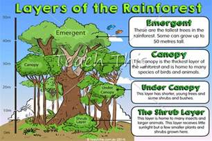 6 best images of of the rainforest layers printable