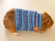 Hamster Sweater Pink 1000 images about guinea pig costumes on