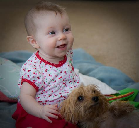 best way to house a yorkie puppy 12 best ways to introduce your terrier to your baby reference