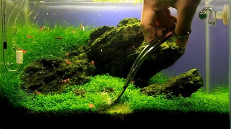 Iwagumi Aquascape by Just Aquascaping Maintenance Mini M Iwagumi