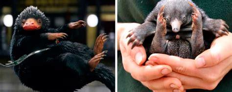 animales fantasticos y donde 8498387949 animales fant 225 sticos y d 243 nde encontrarlos un zoo de australia celebra el nacimiento de tres