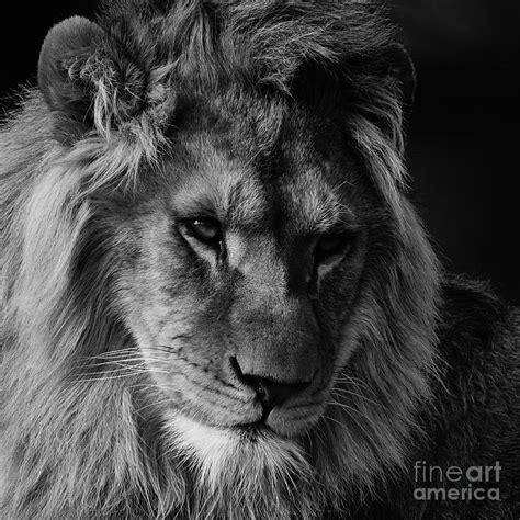 Tshirt Natgeo Wildlife portrait in black and white photograph by nick biemans