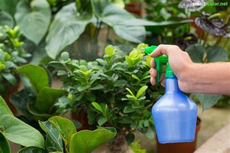 Pflanzen Bilder Selber Machen by Nat 252 Rliche Pflanzenschutzmittel Selbst Herstellen Aus Pflanzen