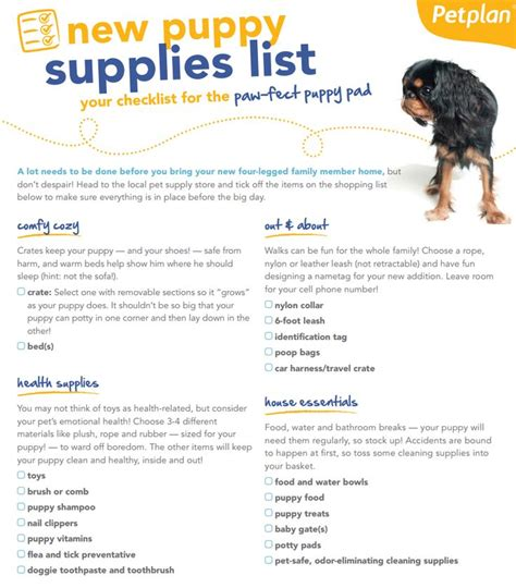 new puppy supplies best 25 new puppy checklist ideas on