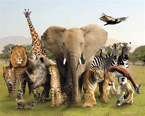 Pin by Cheryl Krauss on Other Wild Life | Animals, Animal ... Groupings Of Animals